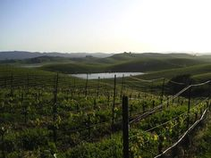 Cline's Sonoma Coast vineyards. Read more: http://www.sonomacounty.com/blog/cline-2011-cool-climate-pinot-noir