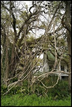Magnolia Plantation, Natchitoches, Louisiana (USA). One of the most haunted places in the south.