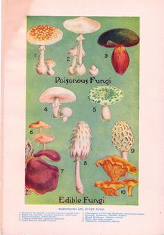 Here is a wide assortment of fung on on a beautiful poster. poisonous fungi edible fungi #fungi #mushrooms