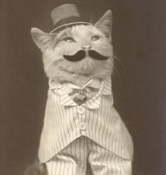 From our time machine, in a direct travel from a vintage universe, the original brandirized cat.