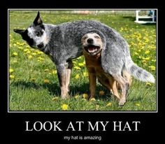 animal pics, hats, funny dogs, funny pictures, funni