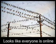 funny animals, funni stuff, laugh, funny pics, onlin, hilarious pictures, funny quotes, humor, birds