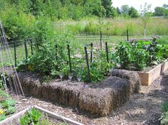 Tale of a Straw bale Raised Garden