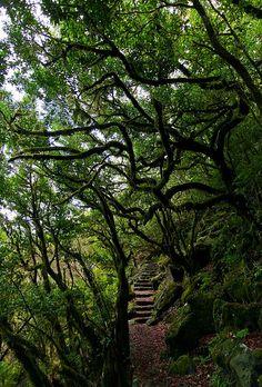 #Madeira islands, #Portugal
