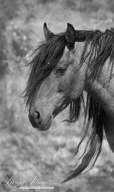 Freedom  Fine Art Wild Horse Photograph by Carol Walker www.LivingImagesCJW.com