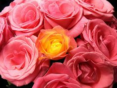 Your Perfect Wedding Bouquet: What Roses Say About You - Wedding Dash Blog Post