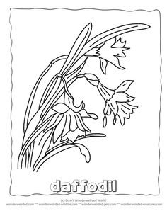 coloring pages of chinas flower - photo#30