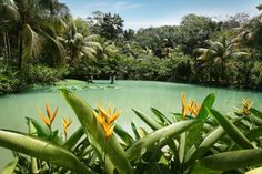 Cranbrook Flower Forest in southern Jamaica. A haven for gorgeous flowers, giant tree ferns and a myriad of exotic plants.