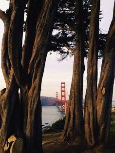 Thru the Trees, San Francisco