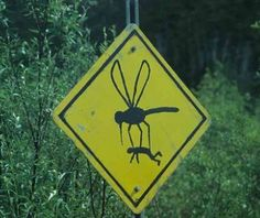 Sometimes it certainly seems like the mosquitos are this large in south Louisiana!