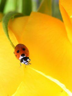 lady bugs :)