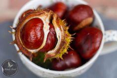 #Autumnal fruit #Conkers  www.melaniechadd.co.uk
