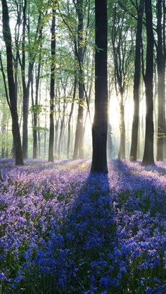 ✯ Dawn in the Forest
