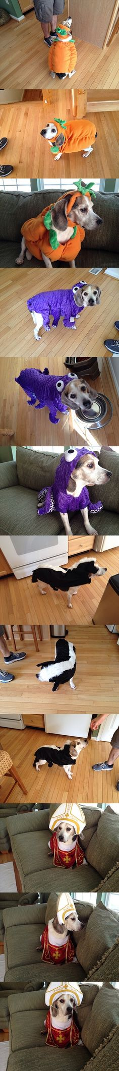 Spenser tries on some of our Halloween dog costumes #halloween