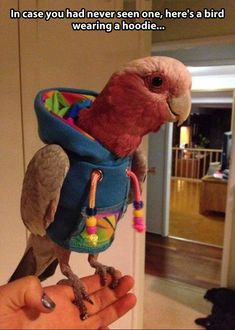 funny pics, exotic birds, funny pictures, funny birds, funny images, bird pictures, funny quotes, funny photos, bucket lists