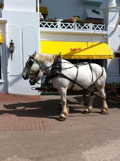 Carriage ride on Mackinac Island