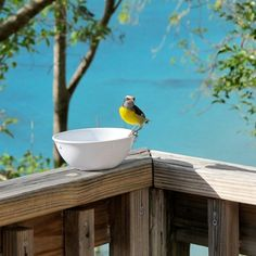Maho Bay Camps Blog - Eco Friendly Resort St. John, US Virgin Islands