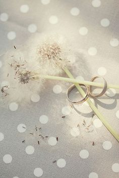 Dandelion Dreams by loretoidas, via Flickr