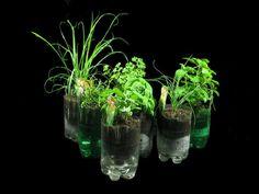 Recycle 2 liter pop bottles plastic bottles, soda bottles, herb garden, bottl herb, recycled bottles, pop bottles, herbs garden, subirrig planter, recycl bottl