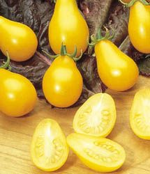 Yellow Pear Tomato: an old heirloom plum-shaped, bright yellow cherry tomatoes. Great and colorful in salsa when paired with bright red cherry tomatoes.  Learn all about types of tomatoes and how to classify them at http://www.tomatodirt.com/tomato-varieties.html.