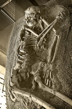 Skeleton at Normanton Church - 1400 Year Old Skeleton Of A Female That Was Found Buried In The Grounds Of Rutland Water.