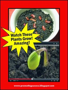 Spring Plants Activities - Amazing Time Lapse Video!