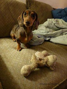 I swear it wasn't me who gutted stuffie Teddy. Great face :)