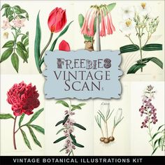 Far Far Hill: Freebies Vintage Botanical Illustrations