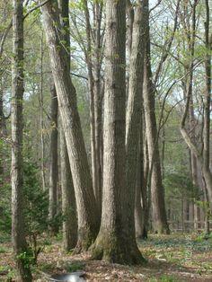 Les arbres du jardin