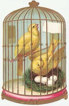MudBay Images: birdcages  (links on left for other categories)
