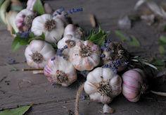 Decorative Garlic Braids With Herbs For Decoration