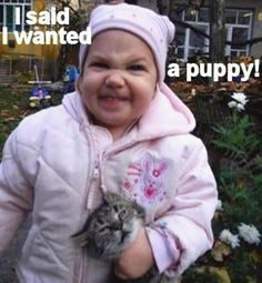 funny animals, kitty cats, little girls, puppies, dog cat