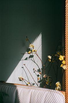 Shadow | Light