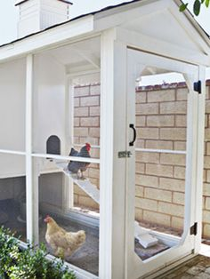 screen porches, farm, fresh eggs, chicken coops, urban chickens, chicken houses, backyard, hen, screen doors