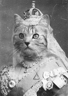 Queen Victoria Kittypuss