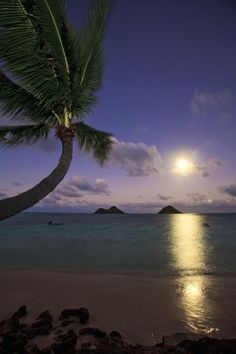 ✮ Moonrise and Palm - Oahu
