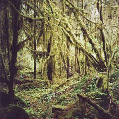 Rainforest in the Olympic Peninsula, Washington USA