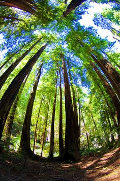 California Muir Woods 36