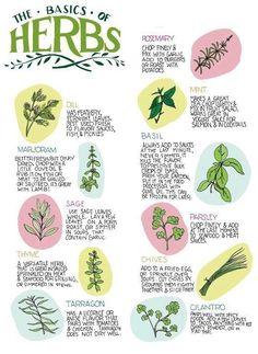 Basics on Herbs