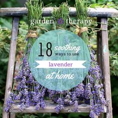 18 Soothing Ways to use Lavender at Home  - plus how to harvest it