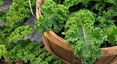 Thinking Beyond Kale: Dr. Drew Ramsey Predicts The Next 'It' Foods | Well Well Well