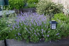 Grow herbs and flowers in containers in a small urban garden.