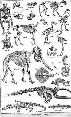 great skeletal reference