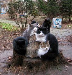 Cat stump