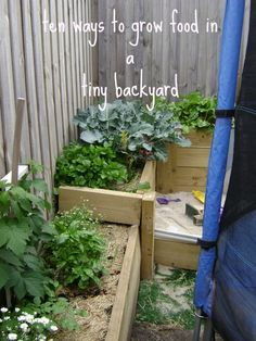 Ten Ways to Grow Food in a Tiny Back Yard - lots of good ideas for bigger spaces too!