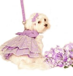 dog fashion, party dresses, judg, dogs, dog dresses, gardens, garden parties, flower, dog clothing