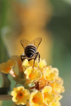 ≗ The Bee's Reverie ≗  bee buffet