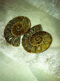 Gorgeous Golden Ammonite Earrings by NorthCoastCottage on Etsy