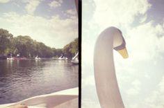 "fieldguided photographic print, swan boats, 6x8"". $10.00, via Etsy."