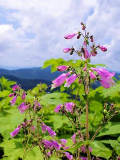 Wildflowers along hiking trail in the North Carolina mountains near Asheville